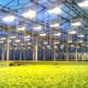 Horticulture led Lighting